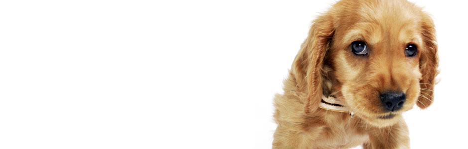 尼崎の動物病院|犬猫診療|保護猫の不妊手術